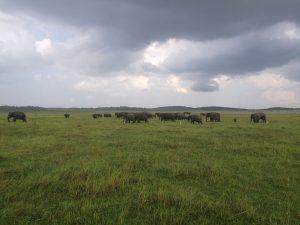 elephants_sri_lanka